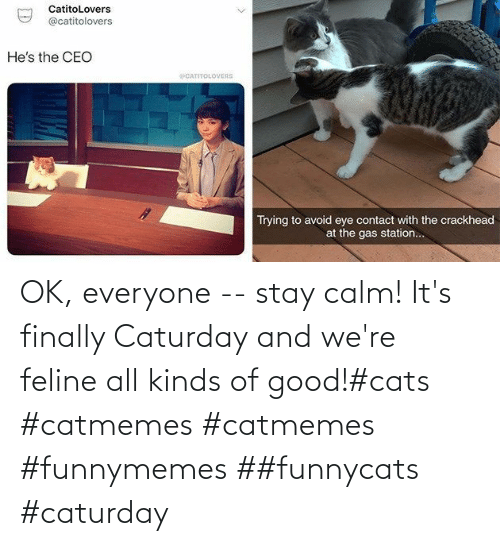 calm: OK, everyone -- stay calm! It's finally Caturday and we're feline all kinds of good!#cats #catmemes #catmemes #funnymemes ##funnycats #caturday