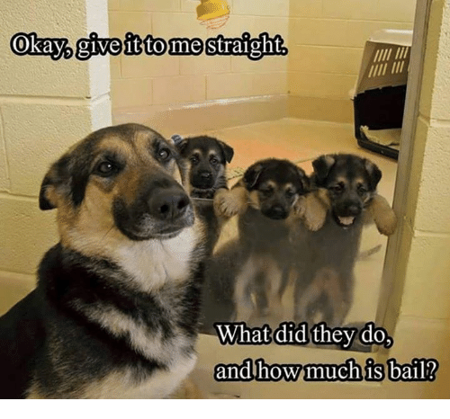 Bailed: Okaypgivefittomestraight  What did they do,  and how much is bail?