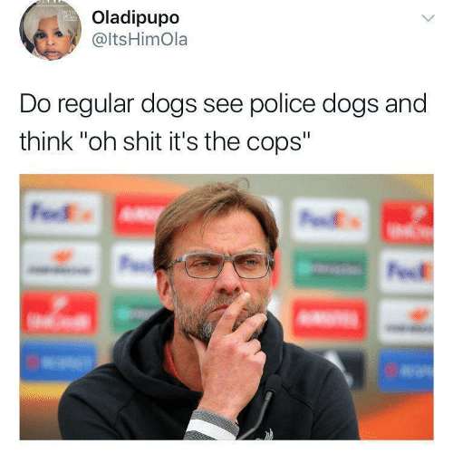 """Dogs, Police, and Shit: Oladipupo  @ltsHimOla  Do regular dogs see police dogs and  think """"oh shit it's the cops"""""""