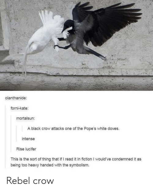 Lucifer, Black, and White: olanthanide:  forni-kate:  mortalsun:  A black crow attacks one of the Pope's white doves.  intense  Rise lucifer  This is the sort of thing that if I read it in fiction I would've condemned it as  being too heavy handed with the symbolism. Rebel crow