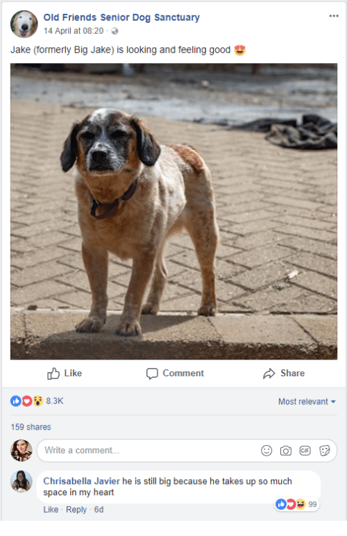 Friends, Good, and Heart: Old Friends Senior Dog Sanctuary  14 April at 08:20 .  Jake (formerly Big Jake) is looking and feeling good  Like  Comment  Share  Most relevant  159 shares  Write a comment..  Chrisabella Javier he is still big because he takes up so much  space in my heart  Like Reply -6d  0599