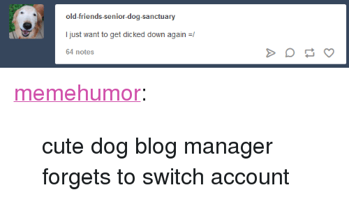 """Cute, Friends, and Tumblr: old-friends-senior-dog-sanctuary  I just want to get dicked down again  64 notes <p><a href=""""http://memehumor.net/post/173608543373/cute-dog-blog-manager-forgets-to-switch-account"""" class=""""tumblr_blog"""">memehumor</a>:</p>  <blockquote><p>cute dog blog manager forgets to switch account</p></blockquote>"""