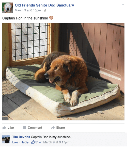 Friends, Old, and March 9: Old Friends Senior Dog Sanctuary  March 9 at 6:16pme  Captain Ron in the sunshine C  Like -Comment Share   Tim Devries Captain Ron is my sunshine.  Like Reply 314 March 9 at 6:17pm