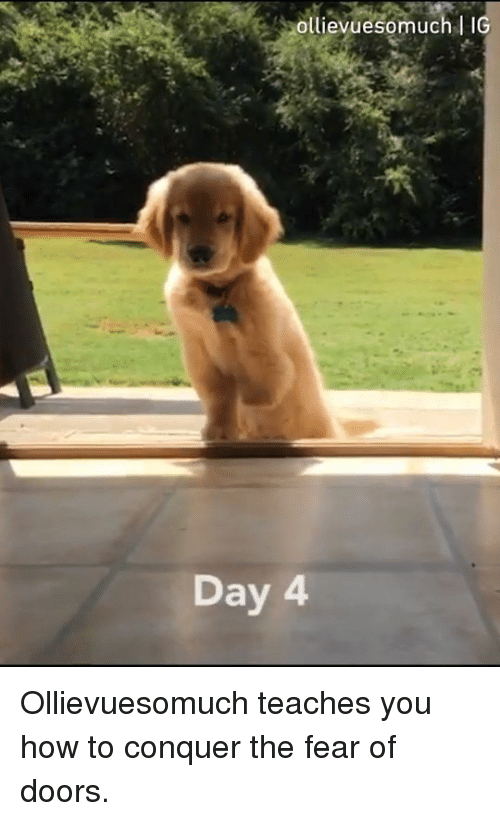 Dank, How To, and Fear: ollievuesomuch l IG  Day Ollievuesomuch teaches you how to conquer the fear of doors.