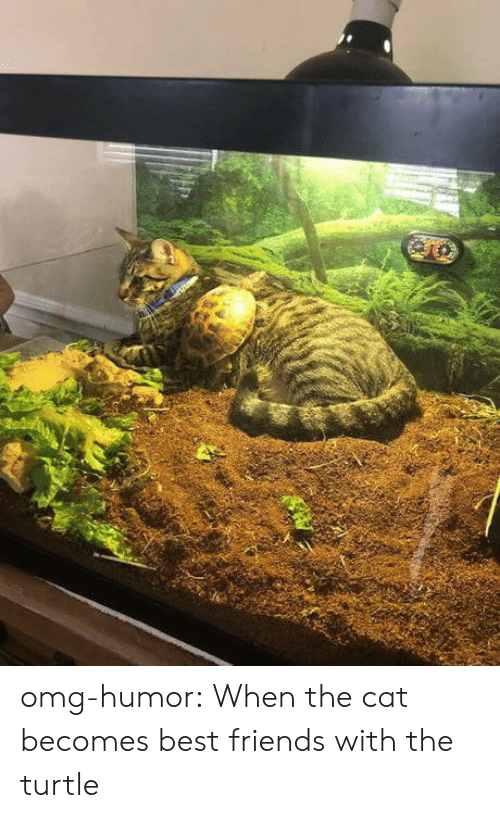 Turtle: omg-humor:  When the cat becomes best friends with the turtle