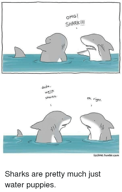 Lizclimo Tumblr: OMG!  SHARKII  dude,  we're  sharks  oh, right  lizclimo.tumblr.com <p>Sharks are pretty much just water puppies.</p>
