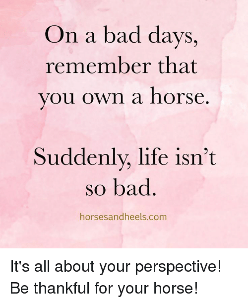 Bad, Life, and Horse: On a bad days,  remember that  vou own a horse  Suddenly, life isn't  so bad  horsesandheels.com It's all about your perspective! Be thankful for your horse!
