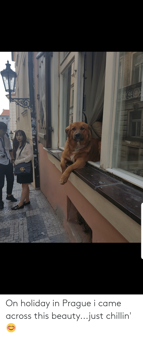 Prague: On holiday in Prague i came across this beauty...just chillin'😊