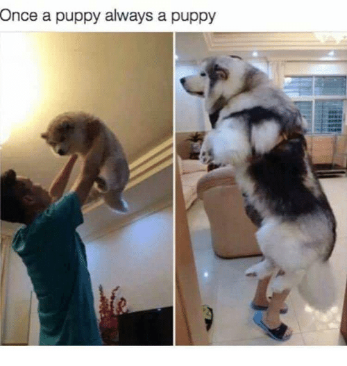 Puppy, Once, and Always: Once  a puppy always a puppy