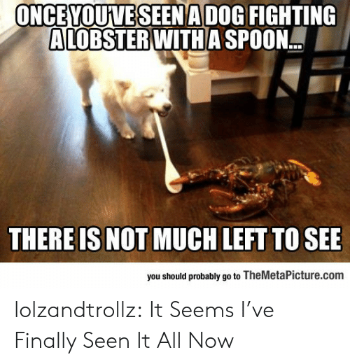 Tumblr, Blog, and Seen It All: ONCEYOUVESEENADOG FIGHTING  ALOBSTER WITH A SPOON.  THERE IS NOT MUCH LEFT TO SEE  you should probably go to TheMetaPicture.com lolzandtrollz:  It Seems I've Finally Seen It All Now