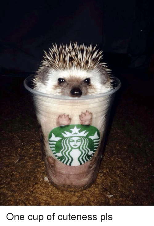 One, Pls, and Cuteness: One cup of cuteness pls
