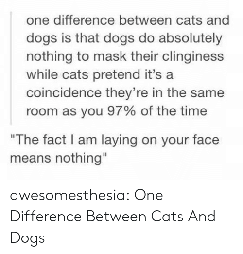 """A Coincidence: one difference between cats and  dogs is that dogs do absolutely  nothing to mask their clinginess  while cats pretend it's a  coincidence they're in the same  room as you 97% of the time  """"The fact I am laying on your face  means nothing"""" awesomesthesia:  One Difference Between Cats And Dogs"""