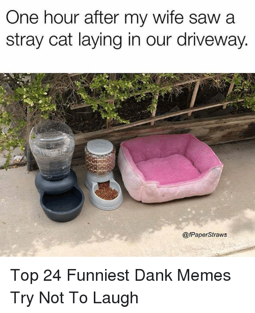 Dank, Memes, and Saw: One hour after my wife saw a  stray cat laying in our driveway.  @fPaperStraws Top 24 Funniest Dank Memes Try Not To Laugh