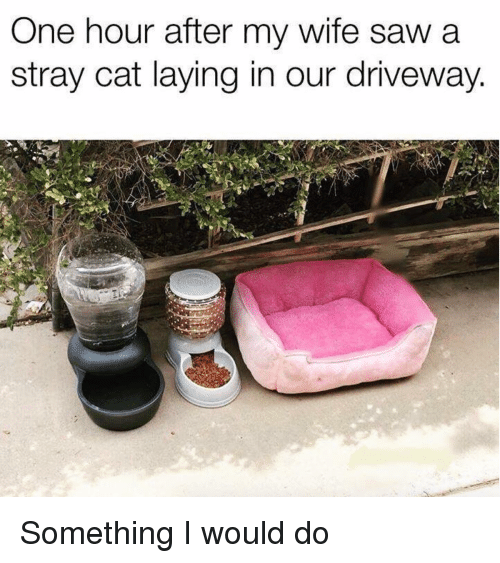 driveway: One hour after my wife saw a  stray cat laying in our driveway. Something I would do