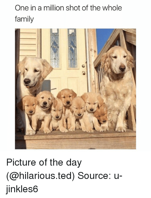 Family, Funny, and Ted: One in a million shot of the whole  family Picture of the day (@hilarious.ted) Source: u-jinkles6