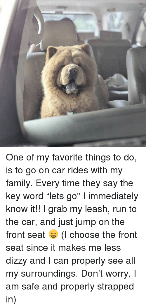 "Family, Memes, and Run: One of my favorite things to do, is to go on car rides with my family. Every time they say the key word ""lets go"" I immediately know it!! I grab my leash, run to the car, and just jump on the front seat 😁 (I choose the front seat since it makes me less dizzy and I can properly see all my surroundings. Don't worry, I am safe and properly strapped in)"