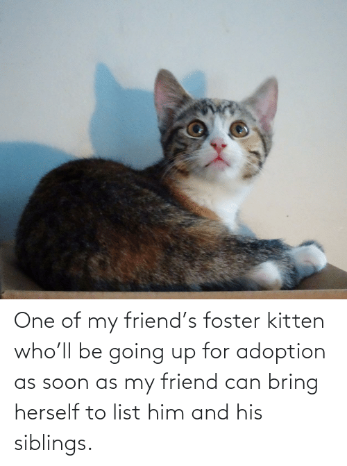 Herself: One of my friend's foster kitten who'll be going up for adoption as soon as my friend can bring herself to list him and his siblings.