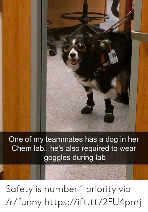 goggles: One of my teammates has a dog in her  Chem lab.. he's also required to wear  goggles during lab Safety is number 1 priority via /r/funny https://ift.tt/2FU4pmj
