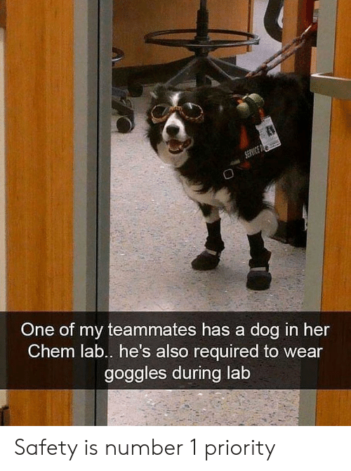 goggles: One of my teammates has a dog in her  Chem lab.. he's also required to wear  goggles during lab Safety is number 1 priority