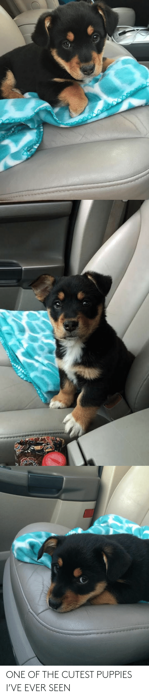 Puppies: ONE OF THE CUTEST PUPPIES I'VE EVER SEEN