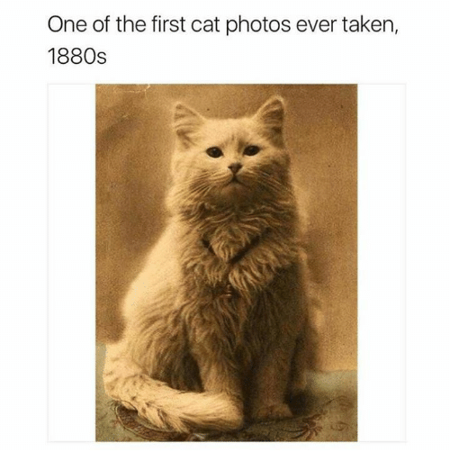 Memes, Taken, and 🤖: One of the first cat photos ever taken,  1880s