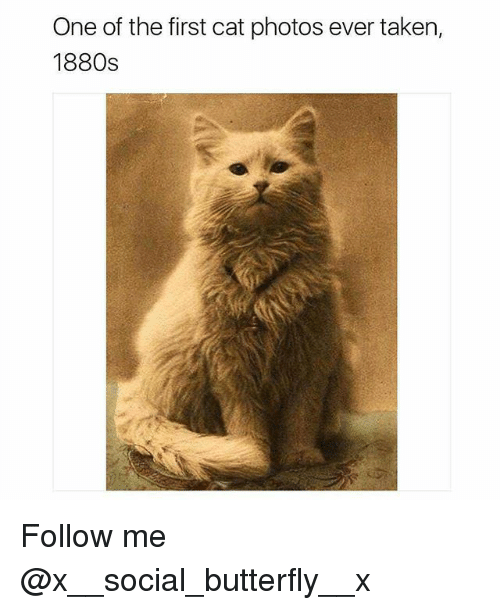 Memes, Taken, and Butterfly: One of the first cat photos ever taken,  1880s Follow me @x__social_butterfly__x
