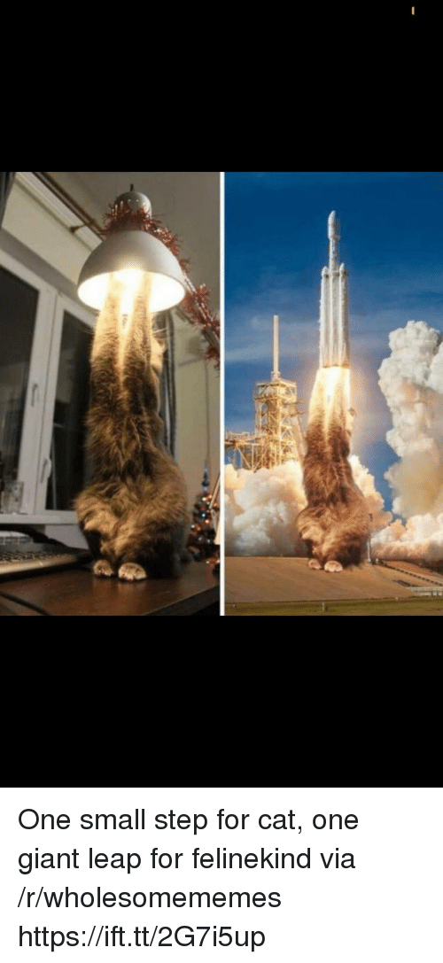 Giant, Cat, and Step: One small step for cat, one giant leap for felinekind via /r/wholesomememes https://ift.tt/2G7i5up