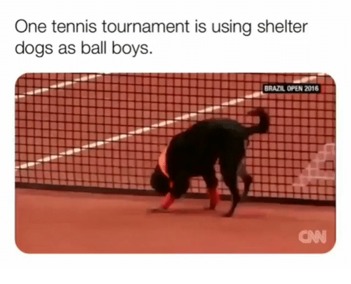 cnn.com, Dogs, and Memes: One tennis tournament is using shelter  dogs as ball boys.  BRAZIL OPEN 2016  CNN
