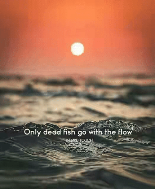 Fish, Touch, and Dead: Only dead fish go with the flow  SERE TOUCH