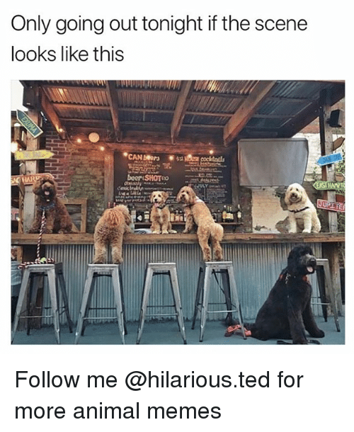 Funny, Memes, and Ted: Only going out tonight if the scene  looks like this Follow me @hilarious.ted for more animal memes