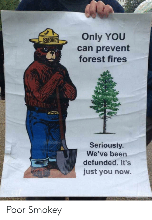 forest: Only YOU  SMOKEY  can prevent  forest fires  NIMIM  USMOR  Seriously.  We've been  defunded. It's  just you now. Poor Smokey