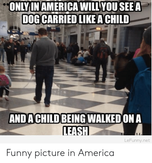 America, Funny, and Net: ONLYIN AMERICAWILLYOU SEEA  DOG CARRIED LIKEACHILD  AND A CHILD BEING WALKED ON A  LEASH  LeFunny.net Funny picture in America