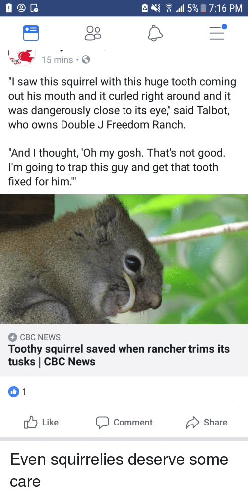 """News, Saw, and Trap: Oo  15 mins S  """"I saw this squirrel with this huge tooth coming  out his mouth and it curled right around and it  was dangerously close to its eye,"""" said Talbot,  who owns Double J Freedom Ranch.  """"And I thought, 'Oh my gosh. That's not good.  I'm going to trap this guy and get that tooth  fixed for him.""""  CBC NEWS  Toothy squirrel saved when rancher trims its  tusks CBC News  uLike Comment Share"""