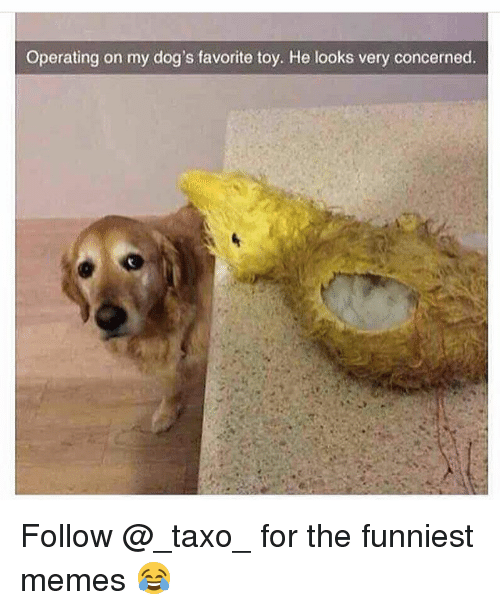 Dogs, Memes, and 🤖: Operating on my dog's favorite toy. He looks very concerned. Follow @_taxo_ for the funniest memes 😂