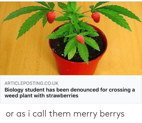 call: or as i call them merry berrys