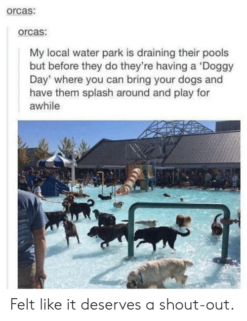 Dogs, Orcas, and Water: orcas:  orcas:  My local water park is draining their pools  but before they do they're having a Doggy  Day' where you can bring your dogs and  have them splash around and play for  awhile Felt like it deserves a shout-out.