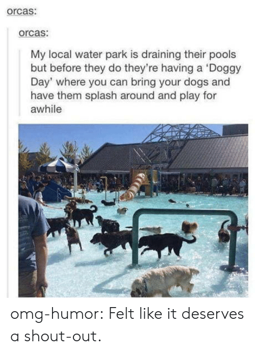 Dogs, Omg, and Orcas: orcas:  orcas:  My local water park is draining their pools  but before they do they're having a Doggy  Day' where you can bring your dogs and  have them splash around and play for  awhile omg-humor:  Felt like it deserves a shout-out.