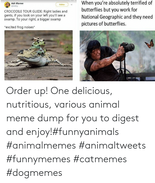 delicious: Order up! One delicious, nutritious, various animal meme dump for you to digest and enjoy!#funnyanimals #animalmemes #animaltweets #funnymemes #catmemes #dogmemes