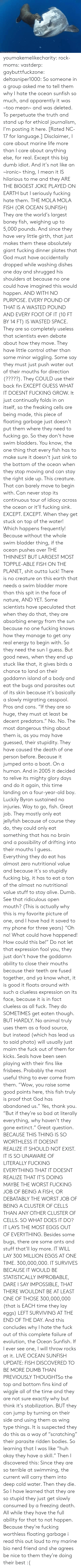 "glory: ORihad Herrma M  S youmakemelikecharity:  rock-moms:  vastderp:  gaybuttfuckzone:  deltasniper1000:  So someone in a group asked me to tell them why I hate the ocean sunfish so much, and apparently it was ~too mean~ and was deleted. To perpetuate the truth and stand up for ethical journalism, I'm posting it here. [Rated NC-17 for language.]  Disclaimer, I care about marine life more than I care about anything else, for real. Except this big dumb idiot. And it's not like an ~ironic~ thing, I mean it IS hilarious to me and they ARE THE BIGGEST JOKE PLAYED ON EARTH but I seriously fucking hate them.  THE MOLA MOLA FISH (OR OCEAN SUNFISH)  They are the world's largest boney fish, weighing up to 5,000 pounds. And since they have very little girth, that just makes them these absolutely giant fucking dinner plates that God must have accidentally dropped while washing dishes one day and shrugged his shoulders at because no one could have imagined this would happen. AND WITH NO PURPOSE. EVERY POUND OF THAT IS A WASTED POUND AND EVERY FOOT OF IT (10 FT BY 14 FT) IS WASTED SPACE.  They are so completely useless that scientists even debate about how they move. They have little control other than some minor wiggling. Some say they must just push water out of their mouths for direction (?????). They COULD use their back fin EXCEPT GUESS WHAT IT DOESNT FUCKING GROW. It just continually folds in on itself, so the freaking cells are being made, this piece of floating garbage just doesn't put them where they need to fucking go.   So they don't have swim bladders. You know, the one thing that every fish has to make sure it doesn't just sink to the bottom of the ocean when they stop moving and can stay the right side up. This creature. That can barely move to begin with. Can never stop its continuous tour of idiocy across the ocean or it'll fucking sink. EXCEPT. EXCEPT. When they get stuck on top of the water! Which happens frequently! Because without the whole swim bladder thing, if the ocean pushes over THE THINNEST BUT LARGEST MOST TOPPLE-ABLE FISH ON THE PLANET, shit outta luck! There is no creature on this earth that needs a swim bladder more than this spit in the face of nature, AND YET. Some scientists have speculated that when they do that, they are absorbing energy from the sun because no one fucking knows how they manage to get any real energy to begin with. So they need the sun I guess. But good news, when they end up stuck like that, it gives birds a chance to land on their goddamn island of a body and eat the bugs and parasites out of its skin because it's basically a slowly migrating cesspool. Pros and cons.   ""If they are so huge, they must at least be decent predators."" No. No. The most dangerous thing about them is, as you may have guessed, their stupidity. They have caused the death of one person before. Because it jumped onto a boat. On a human. And in 2005 it decided to relive its mighty glory days and do it again, this time landing on a four-year-old boy. Luckily Byron sustained no injuries. Way to go, fish. Great job.  They mostly only eat jellyfish because of course they do, they could only eat something that has no brain and a possibility of drifting into their mouths I guess. Everything they do eat has almost zero nutritional value and because it's so stupidly fucking big, it has to eat a ton of the almost no nutritional value stuff to stay alive. Dumb. See that ridiculous open mouth? (This is actually why this is my favorite picture of one, and I have had it saved to my phone for three years) ""Oh no! What could have happened! How could this be!"" Do not let that expression fool you, they just don't have the goddamn ability to close their mouths because their teeth are fused together, and ya know what, it is good it floats around with such a clueless expression on its face, because it is in fact clueless as all fuck.  They do SOMETIMES get eaten though. BUT HARDLY. No animal truly uses them as a food source, but instead (which has lead us to said photo) will usually just maim the fuck out of them for kicks. Seals have been seen playing with their fins like frisbees. Probably the most useful thing to ever come from them.   ""Wow, you raise some good points here, this fish truly is proof that God has abandoned us."" Yes, thank you. ""But if they're so bad at literally everything, why haven't they gone extinct."" Great question.   BECAUSE THIS THING IS SO WORTHLESS IT DOESNT REALIZE IT SHOULD NOT EXIST. IT IS SO UNAWARE OF LITERALLY FUCKING EVERYTHING THAT IT DOESNT REALIZE THAT IT'S DOING MAYBE THE WORST FUCKING JOB OF BEING A FISH, OR DEBATABLY THE WORST JOB OF BEING A CLUSTER OF CELLS THAN ANY OTHER CLUSTER OF CELLS. SO WHAT DOES IT DO? IT LAYS THE MOST EGGS OUT OF EVERYTHING. Besides some bugs, there are some ants and stuff that'll lay more. IT WILL LAY 300 MILLION EGGS AT ONE TIME. 300,000,000. IT SURVIVES BECAUSE IT WOULD BE STATISTICALLY IMPROBABLE, DARE I SAY IMPOSSIBLE, THAT THERE WOULDNT BE AT LEAST ONE OF THOSE 300,000,000 (that is EACH time they lay eggs) LEFT SURVIVING AT THE END OF THE DAY.   And this concludes why I hate the fuck out of this complete failure of evolution, the Ocean Sunfish. If I ever see one, I will throw rocks at it.   LIVE OCEAN SUNFISH UPDATE: FISH DISCOVERED TO BE MORE DUMB THAN PREVIOUSLY THOUGHTSo  the top and bottom fins kind of wiggle all of the time and they are not  sure exactly why but think it's stabilization. BUT they can jump by  turning on their side and using them as  wing type things. It is suspected they do this as a way of ""scratching""  their parasite ridden bodies. So learning that I was like ""huh okay they  have a skill."" Then I discovered this: Since they  are so terrible at swimming, the current will carry them into deep cold  water. Then they die. So I have learned that they are so stupid they  just get slowly consumed by a freezing death. All while they have the  full ability for that to not happen. Because they're fucking worthless  floating garbage    i read this out loud to my marine bio nerd friend and she agrees   be nice to them they're doing their best :("