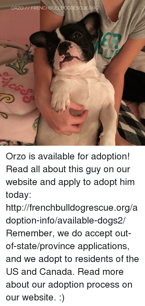 Memes, 🤖, and Org: ORZO FRENCHBULLDOGRESOUE.OR Orzo is available for adoption! Read all about this guy on our website <location, likes, dislikes> and apply to adopt him today: http://frenchbulldogrescue.org/adoption-info/available-dogs2/  Remember, we do accept out-of-state/province applications, and we adopt to residents of the US and Canada. Read more about our adoption process on our website. :)