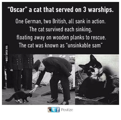 "Memes, British, and 🤖: ""Oscar"" a cat that served on 3 warships.  One German, two British, all sank in action.  The cat survived each sinking  floating away on wooden planks to rescue.  s The cat was known as ""unsinkable sam  ET Postize"