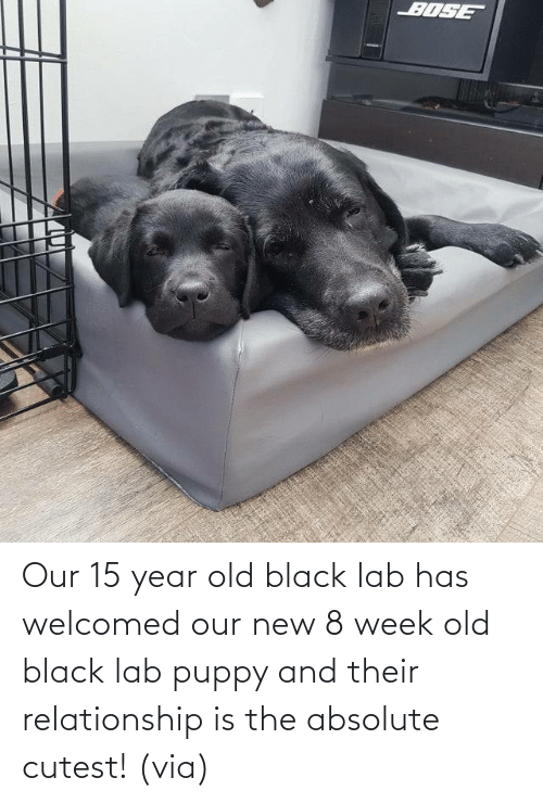 relationship: Our 15 year old black lab has welcomed our new 8 week old black lab puppy and their relationship is the absolute cutest!(via)