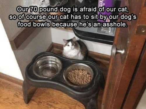 Food, Memes, and Asshole: Our 7O pound dog is afraid of our cat  soof course our cat has tosit by our doa's  food  bowls because he's an  asshole