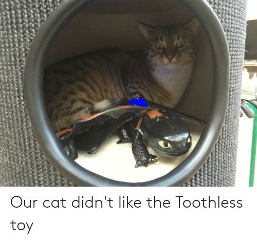 toy: Our cat didn't like the Toothless toy