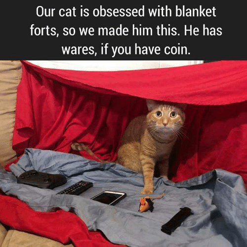 Memes, 🤖, and Cat: Our cat is obsessed with blanket  forts, so we made him this. He has  wares, if you have coin