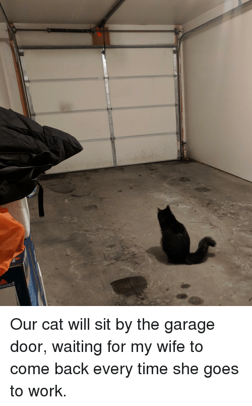 Work, Time, and Wife: Our cat will sit by the garage door, waiting for my wife to come back every time she goes to work.