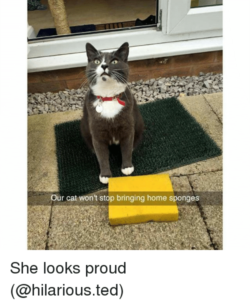 sponges: Our cat won't stop bringing home sponges She looks proud (@hilarious.ted)