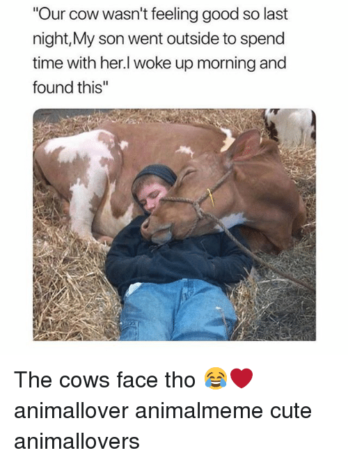 "Cute, Memes, and Good: ""Our cow wasn't feeling good so last  night,My son went outside to spend  time with her.l woke up morning and  found this'"" The cows face tho 😂❤️ animallover animalmeme cute animallovers"