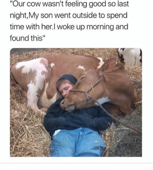 Good, Time, and Her: Our cow wasn't feeling good so last  night,My son went outside to spend  time with her.l woke up morning and  found this""