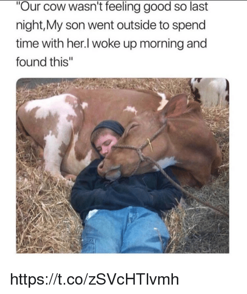 "Memes, Good, and Time: ""Our cow wasn't feeling good so last  night,My son went outside to spend  time with her.l woke up morning and  found this'"" https://t.co/zSVcHTlvmh"